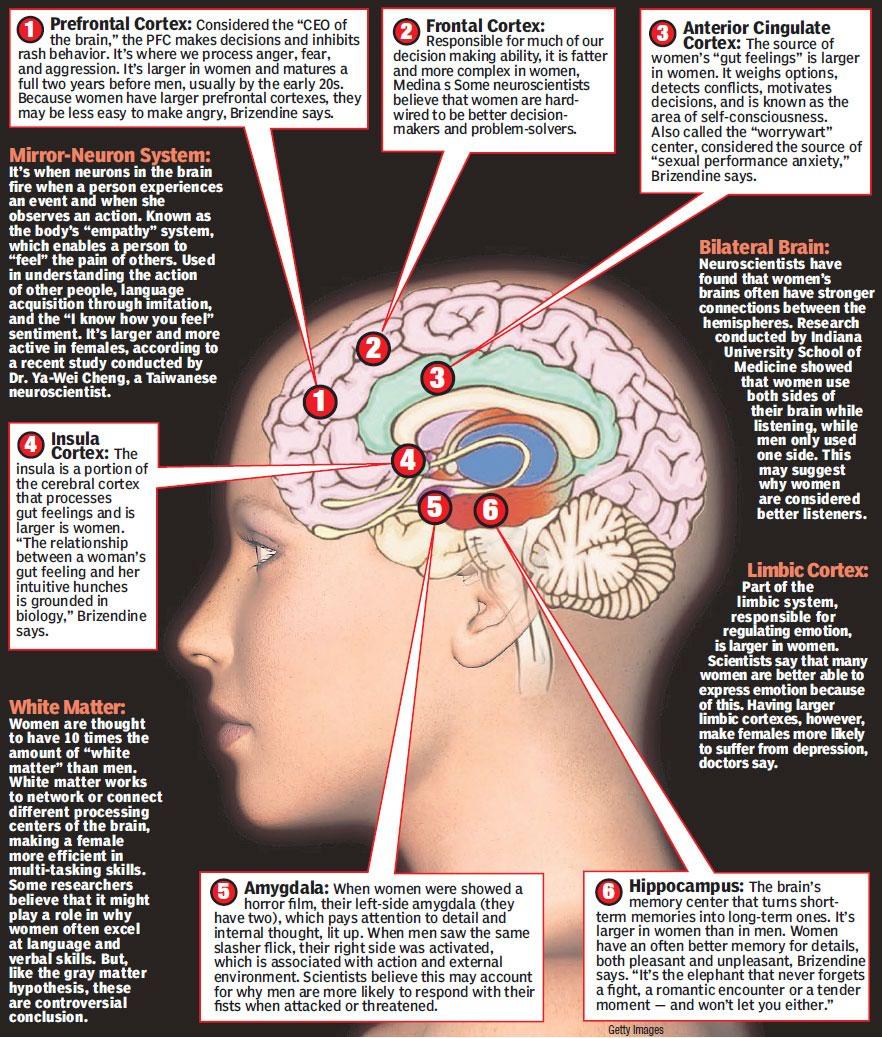 Creierul femeii luann brizendine online dating