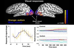 autism-neural-visual-responses