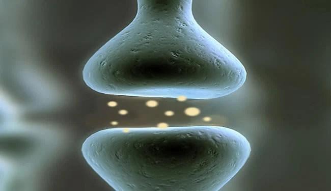synapse-neurotransmitters
