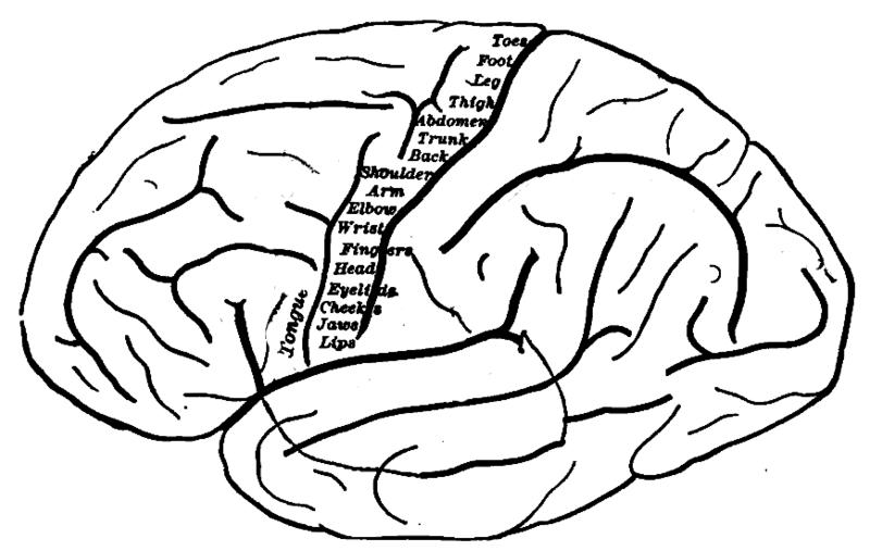 Neuroscience News Author At Neuroscience News