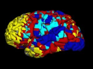 This is an fMRI of the brain during resting state.