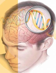 The image shows a dna double helix in a man's head.