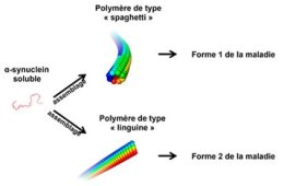 The iamge shows the spaghetti type polymer. The caption best describes the image.