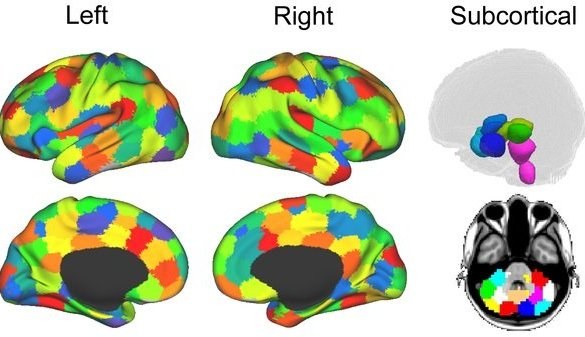 The image shows the parcellation of brain data into 194 cortical, subcortical and cerebellar ROIs.