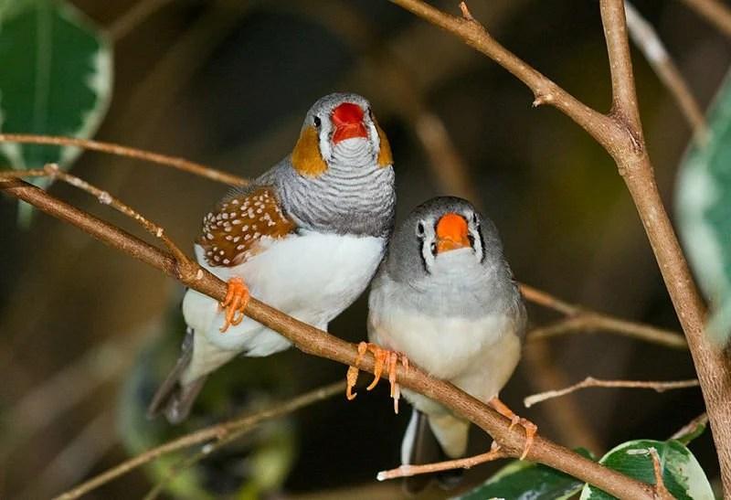 Bird Study Finds Key Information About Human Speech-Language Development