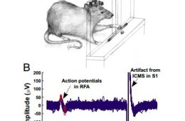 The image shows a rat with the BMI attached and electrical recording output.