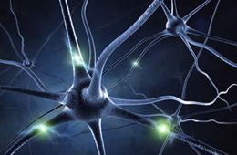 This image shows a representation of neurons.