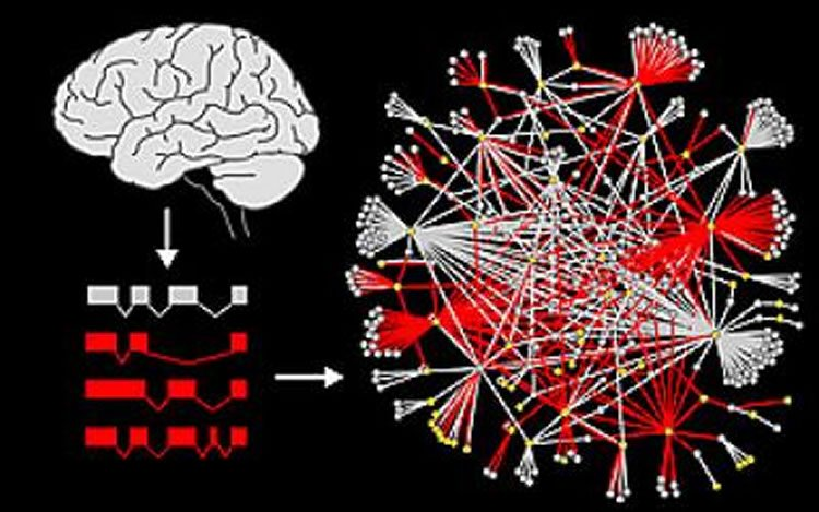 This image a brain and a representation of the networks. The caption best describes the image.