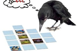 This image shows a crow looking at the game cards mentioned in the article.
