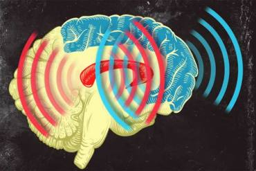 This image shows the brain activity in the striatum and prefrontal cortex. The caption best describes the image.