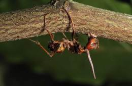 This image shows a dead ant.