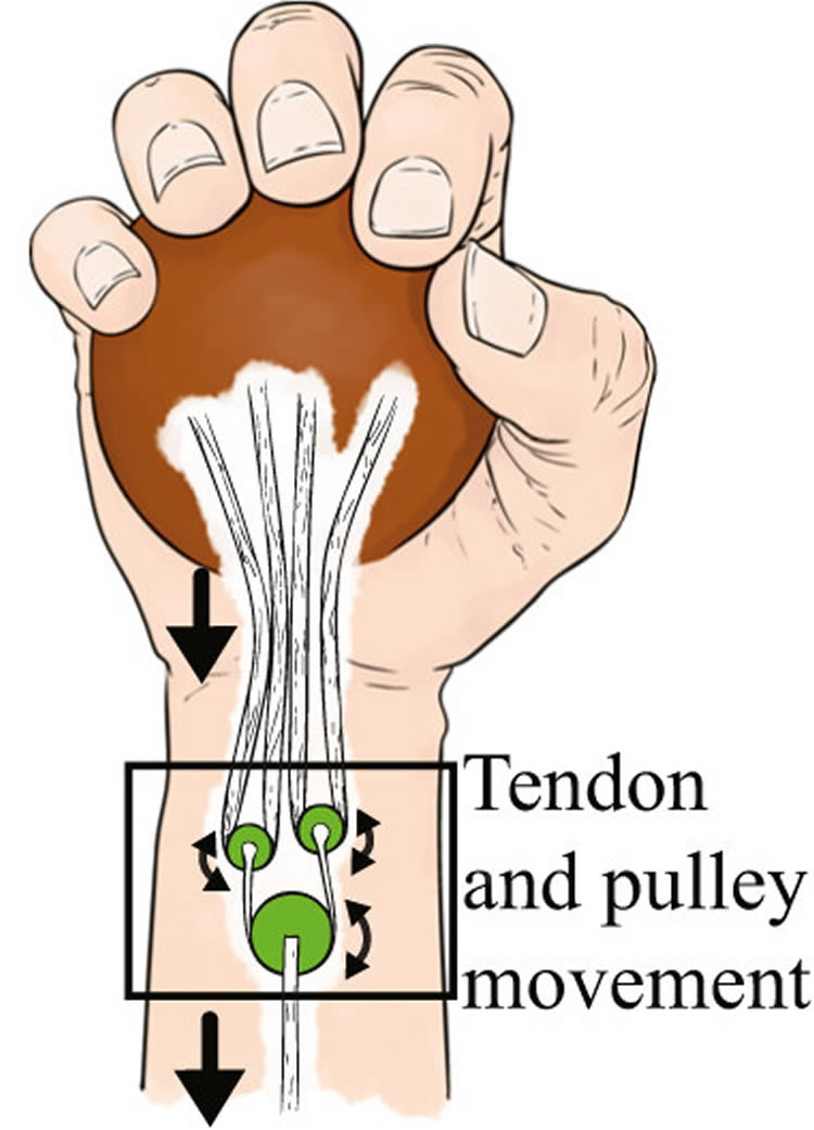 Großzügig Finger Pulley Anatomy Ideen - Menschliche Anatomie Bilder ...