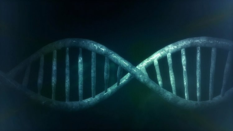This image shows a representation of a DNA double helix.