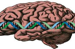The image is a drawing of a brain with a strand of DNA drawn over the top.