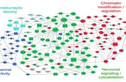 The image shows a web-like graph showing the network of autism associated genes.