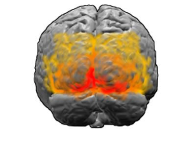 This image shows the primary visual cortex of the brain highlighted in red.