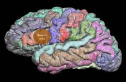 This image shows a brain with the broca's area highlighted in orange.