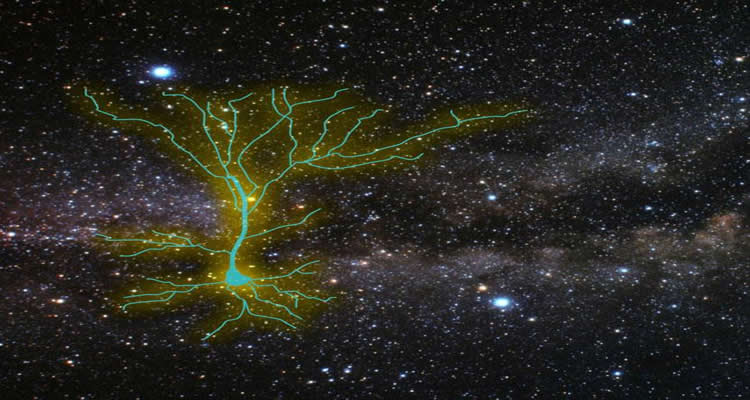 This image shows a neuron against a star background.