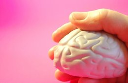 This image shows a person holding a brain toy.