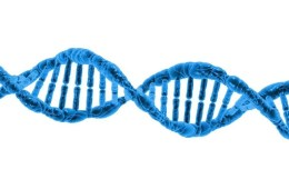 This image shows s DNA double helix.
