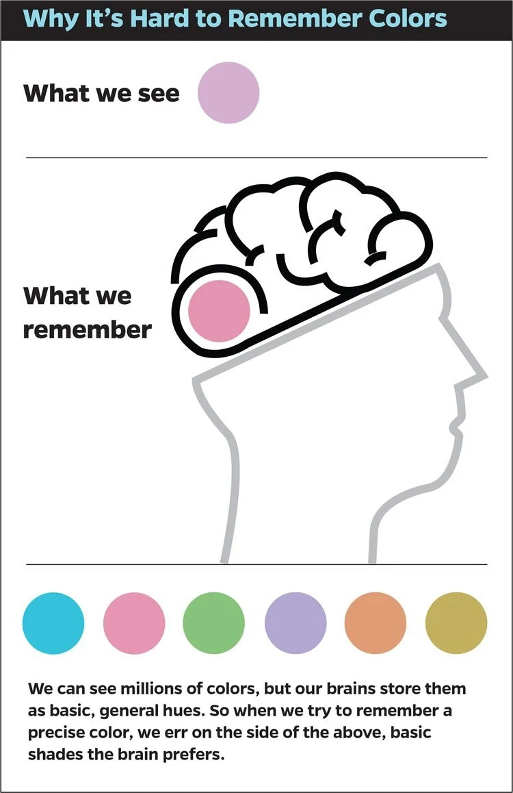 This image shows the outline of a head with the brain exposes. There are colored dots under the image.
