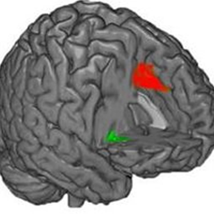 Physical Differences Found in Brains of People Who Respond Either Emotionally or Rationally