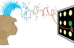 This is a drawing of a monkey controlling the cursor on a computer monitor. There are waves drawn above the monkey's head to imply that it is using thought to move the cursor.