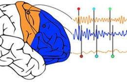 This image shows a brain and wave frequencies.