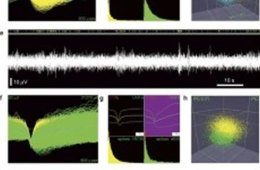 The image shows different evoked neural signals.