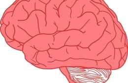 The human brain uses up to 25% of the body's energy budget and up to 60% of blood glucose. Image is for illustrative purposes only.