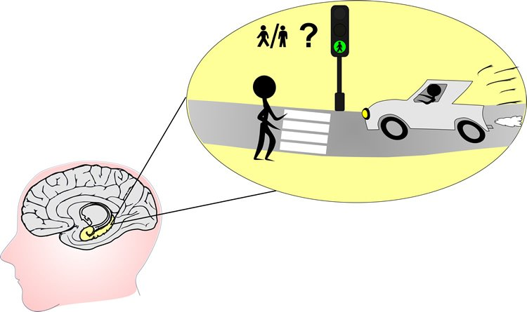 This image shows a brain with the hippocampus highlighted. In a thought bubble is an image of a person crossing a street.