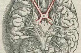 This image shows the location of the visual cortex.