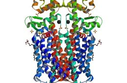 Image shows a crystal structure of the mu-opioid receptor bound to a morphinan antagonists.