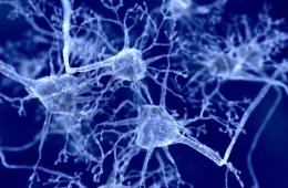 Neurons in blue are shown.