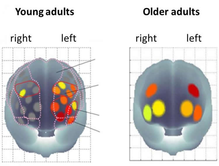 Secret to Younger Brain May Lie in Exercising The Body