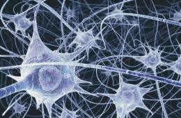 Illustration of neurons.