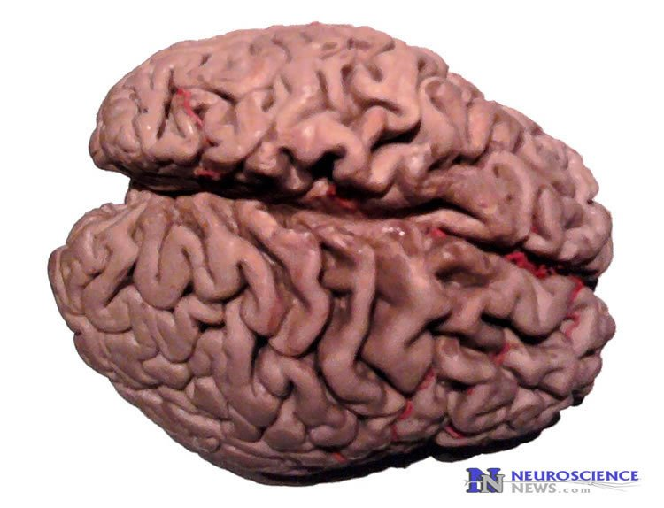 Preventing Alzheimer's Diseases by Modulating Stress Circuitry