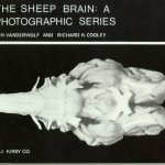 The-Sheep-Brain-A-Photographic-Series-0
