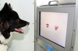 Image shows a dog with his nose touching a monitor.
