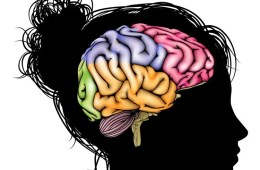 Image shows female head outlined with a colorful brain inside the skull.