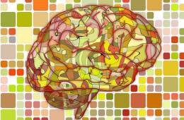 Image shows a multi colored brain.