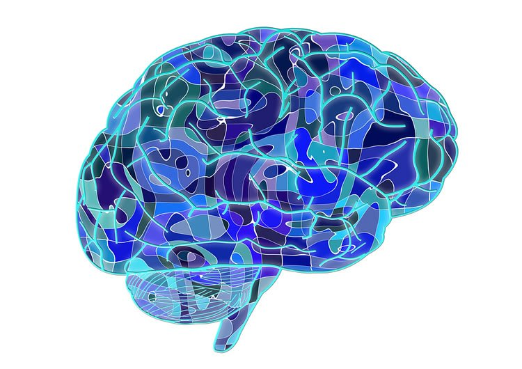 The Brain Processes Social Information at High Priority