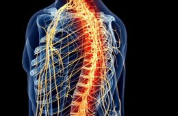 Image shows the outline of a person with the spinal cord highlighted orange.