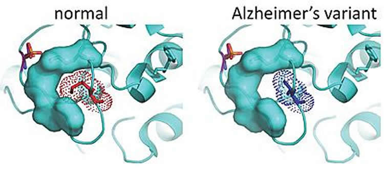 Image shows 3D structures of PKC proteins.