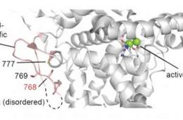 Image shows the crystal structure of the cAMP-degrading enzyme phosphodiesterase PDE3B.