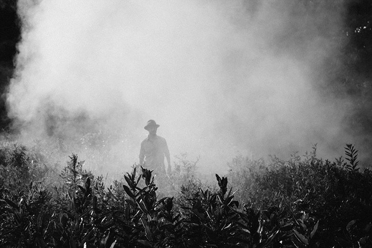 Image shows a person spraying crops.
