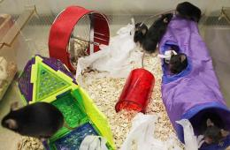 Image shows mice playing in tubes and on a wheel.