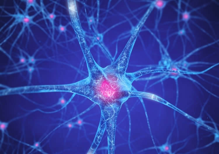 Researchers Identify New Brain Pathways Linked to Addiction