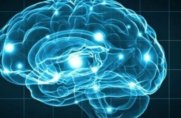 a blue brain.