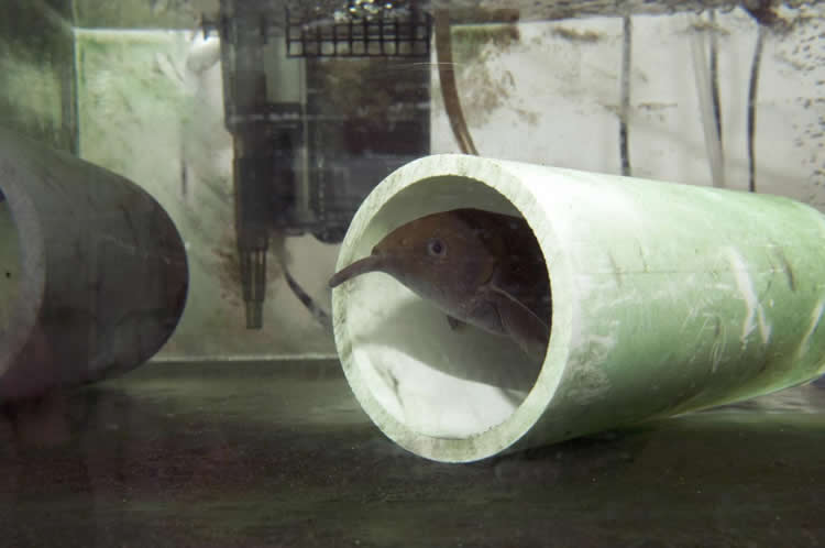 Image shows a fish in a tube.